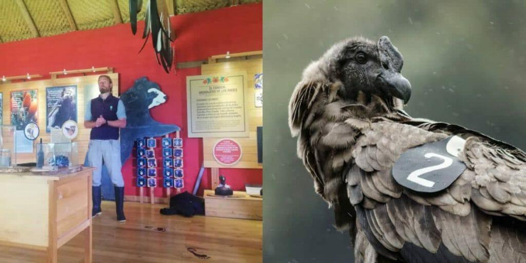 imbabura-ecuador-zuleta-condor-huasi-experiencer