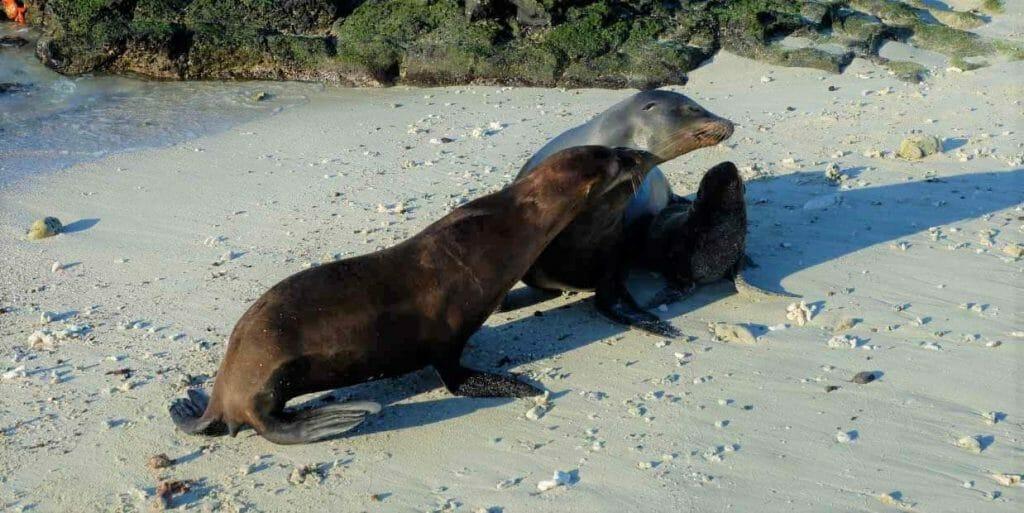 sea-lions-playing-galapagos-islands