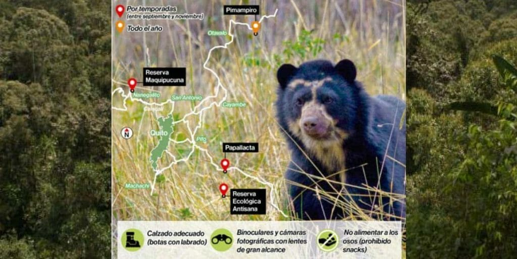 map of where to see andean bears in ecuador