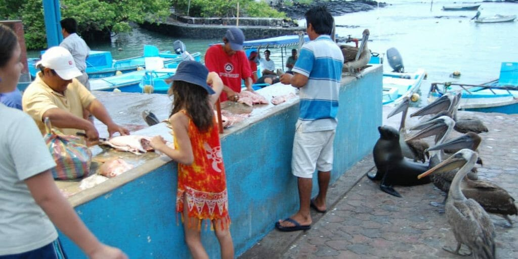 Tips for the perfect Galapagos Islands family vacation