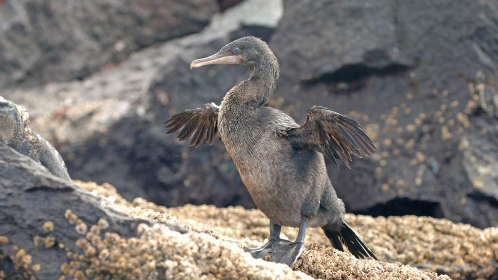 Isabela Island – Galapagos Visitor Guide