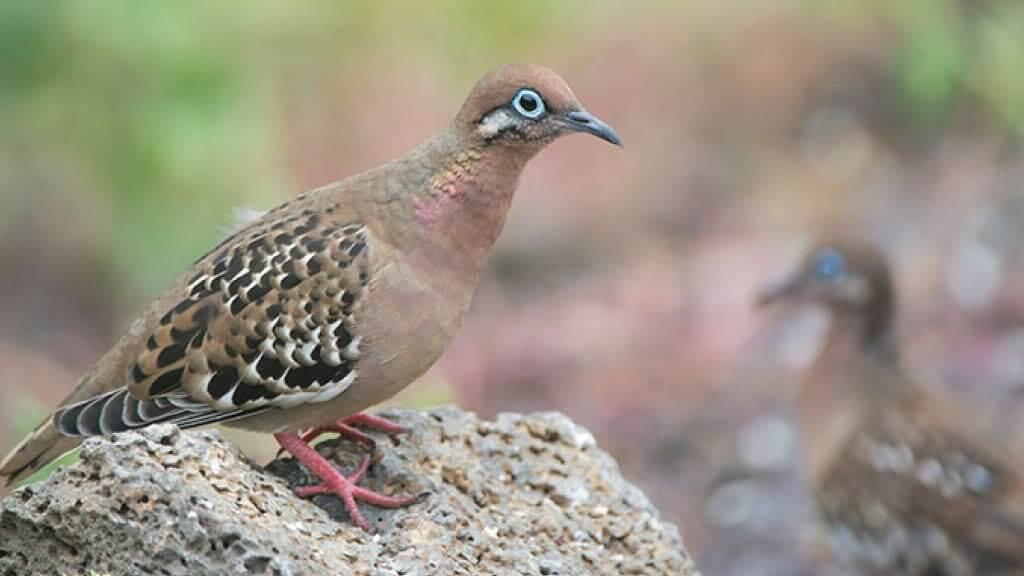 Galapagos Birds: A Bird Lovers Guide to the Galapagos Islands