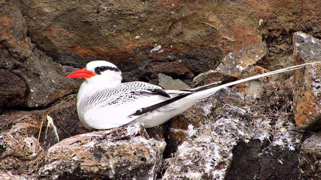 Santa Fe Galapagos Visitor Guide