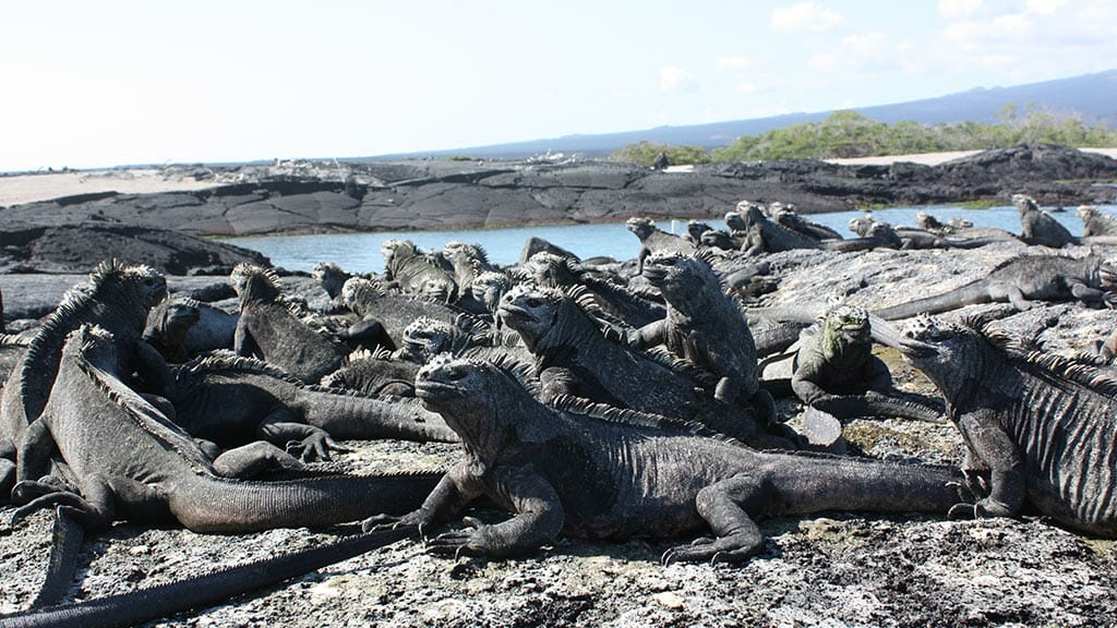Evolution in the Galapagos Islands