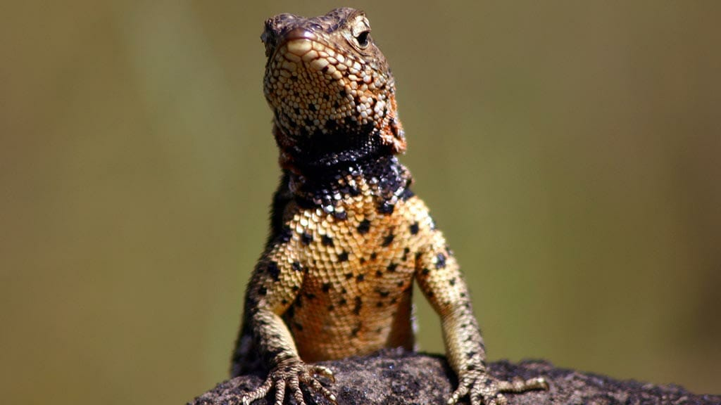 Galapagos Islands Animals: A Wildlife Lovers Guide