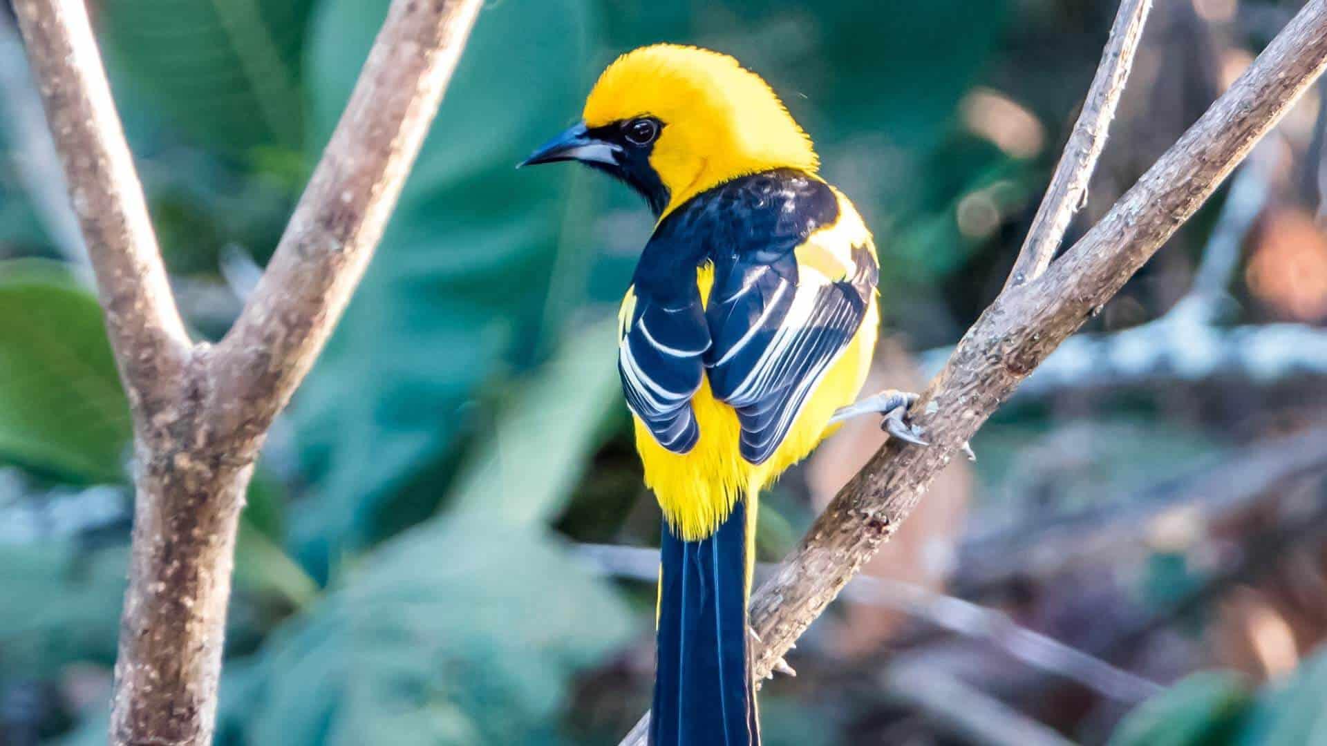 Ecuador southern Bird tour