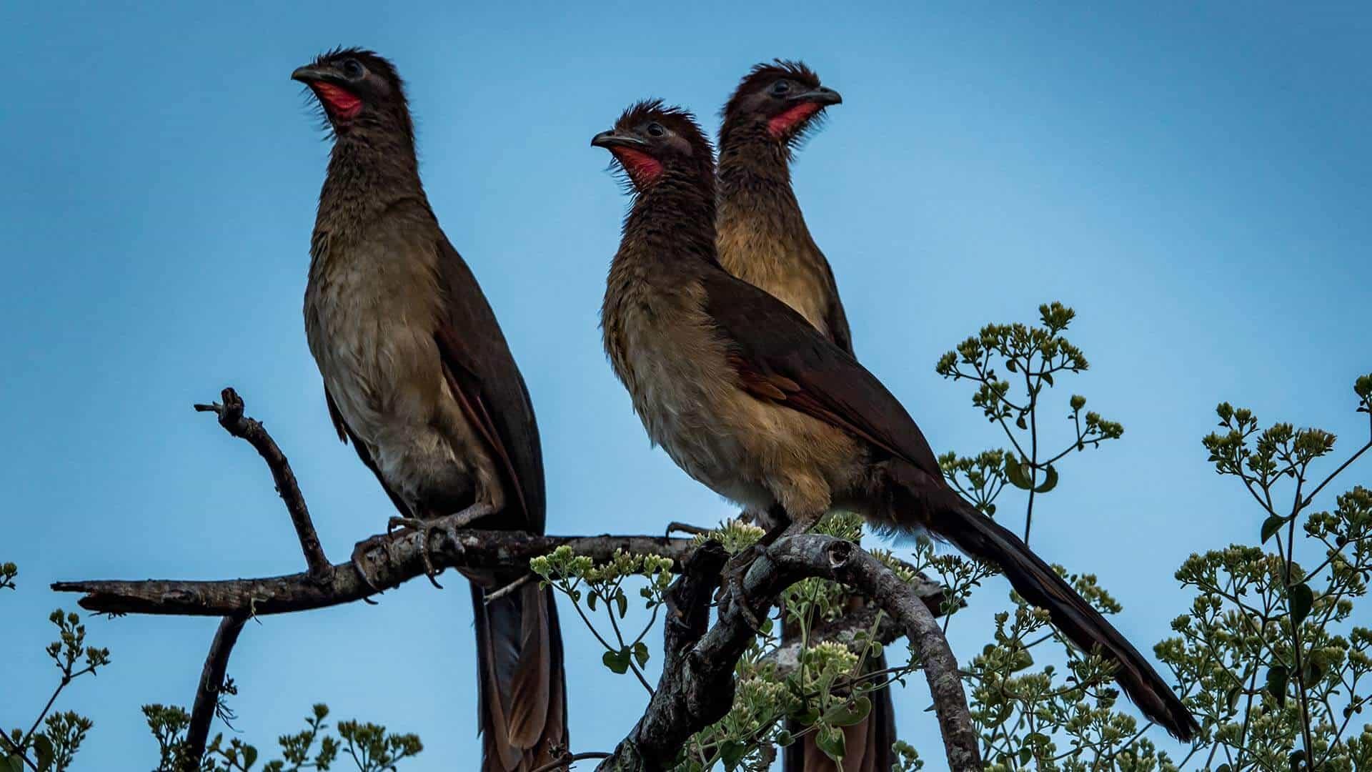 Ecuador southern Birding tour