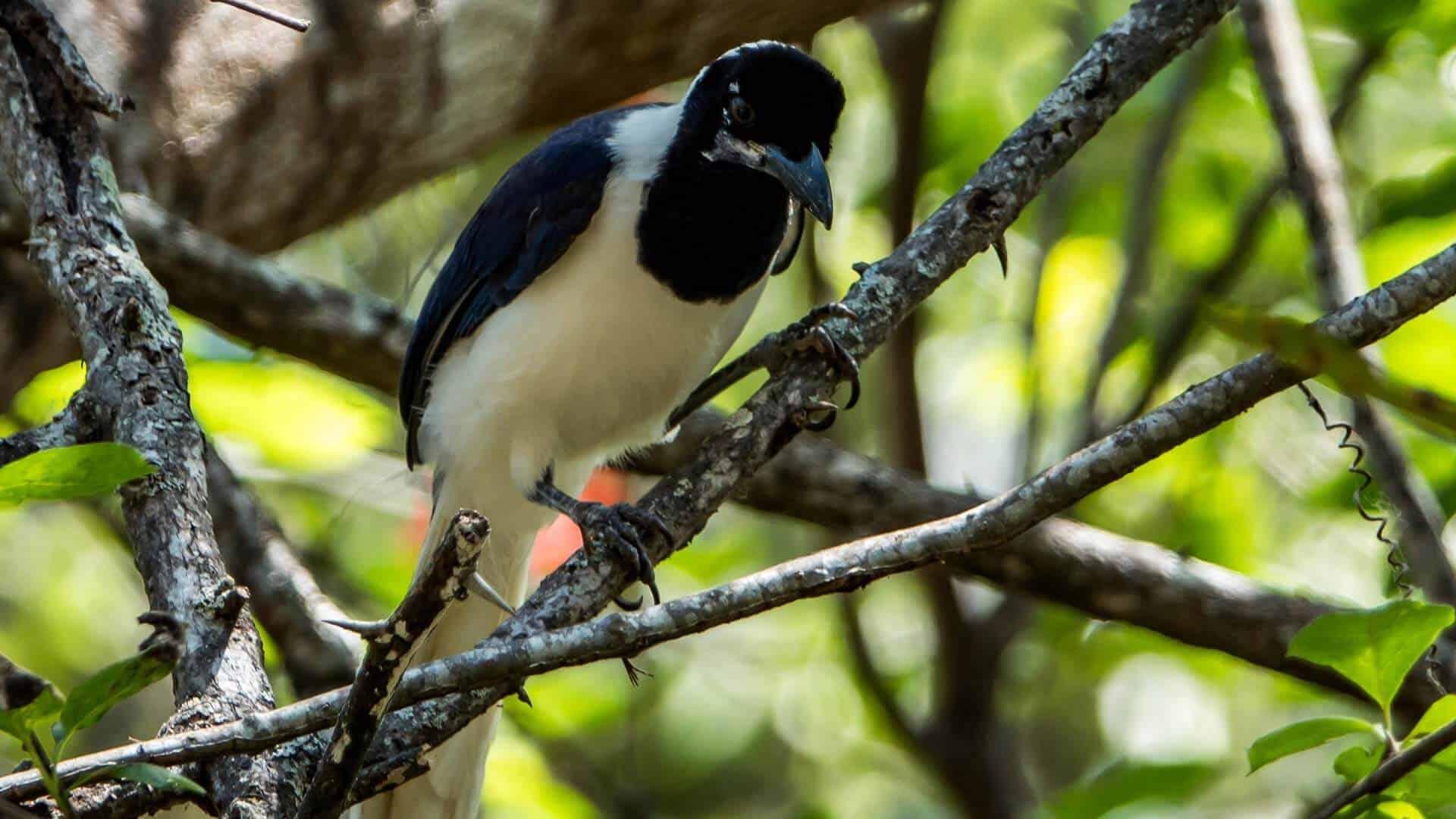 south ecuador bird watching tour