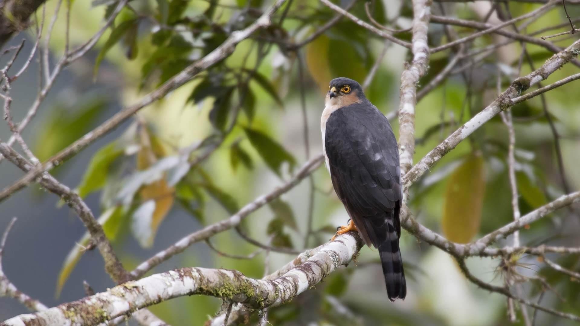 Ecuador birding tours