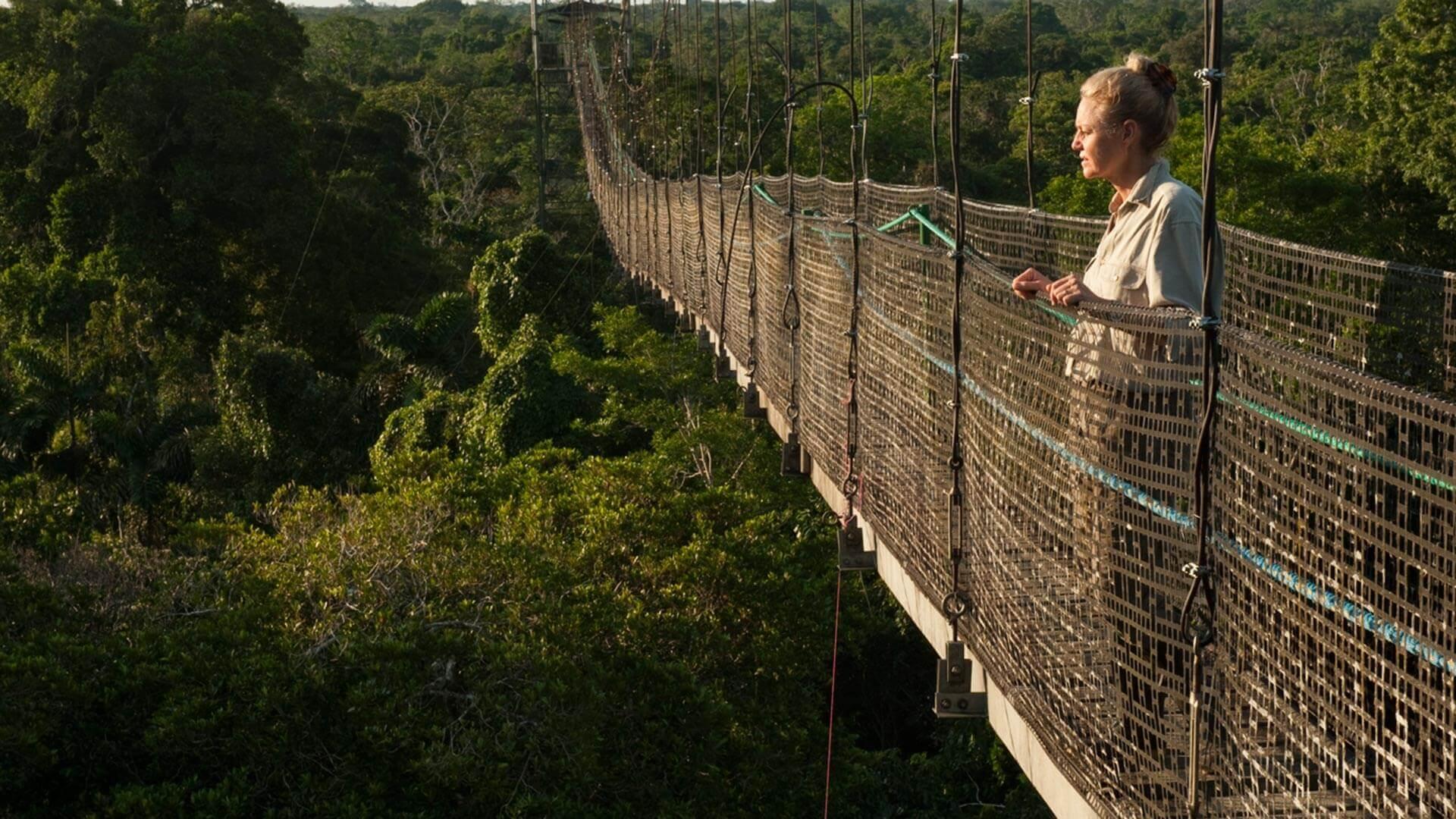 a solo tourist enjoys rainforest views from sacha lodge canopy walkway