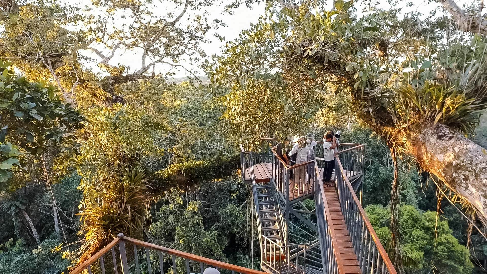 sacha lodge amazon canopy tower perfect for bird watching in ecuador