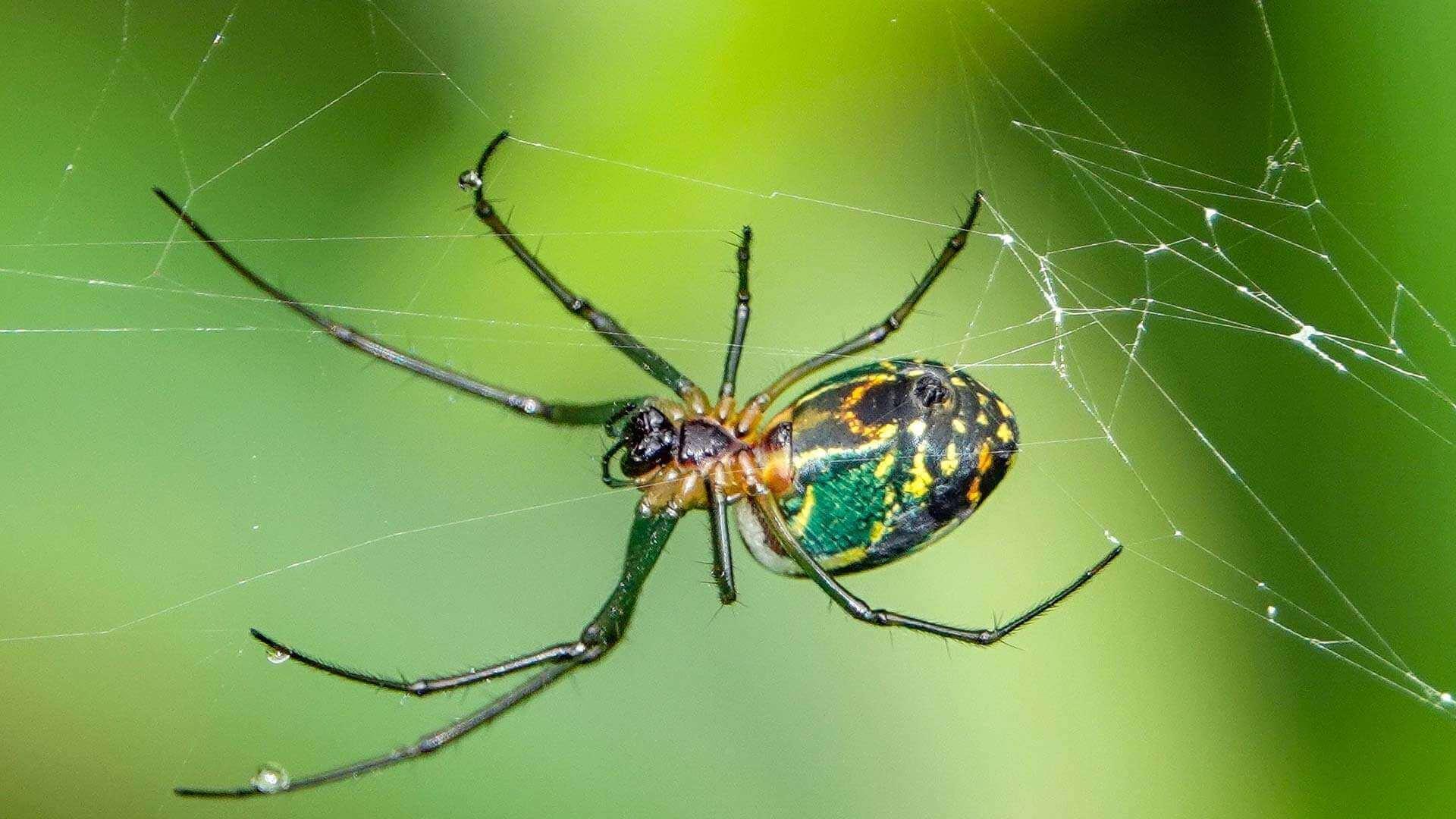 ecuador photography tour - macro image of a colorful spider