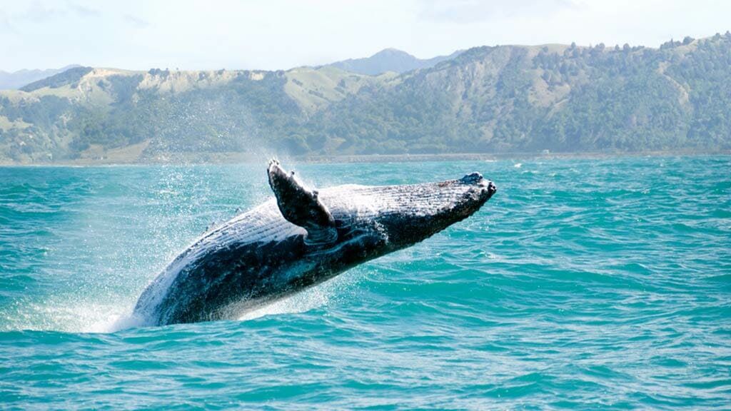Whale watching off Ecuador's Pacific coast