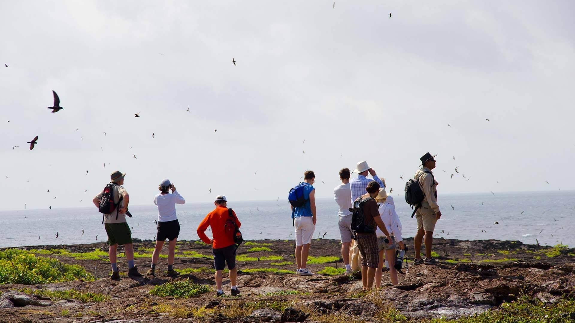 cliff top bird watching on a galapagos land tour