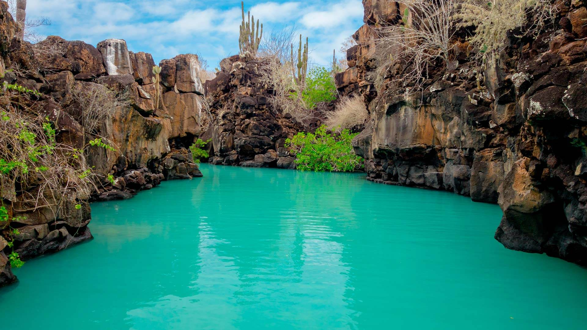swim turquoise waters at las grietas on a galapagos land tour