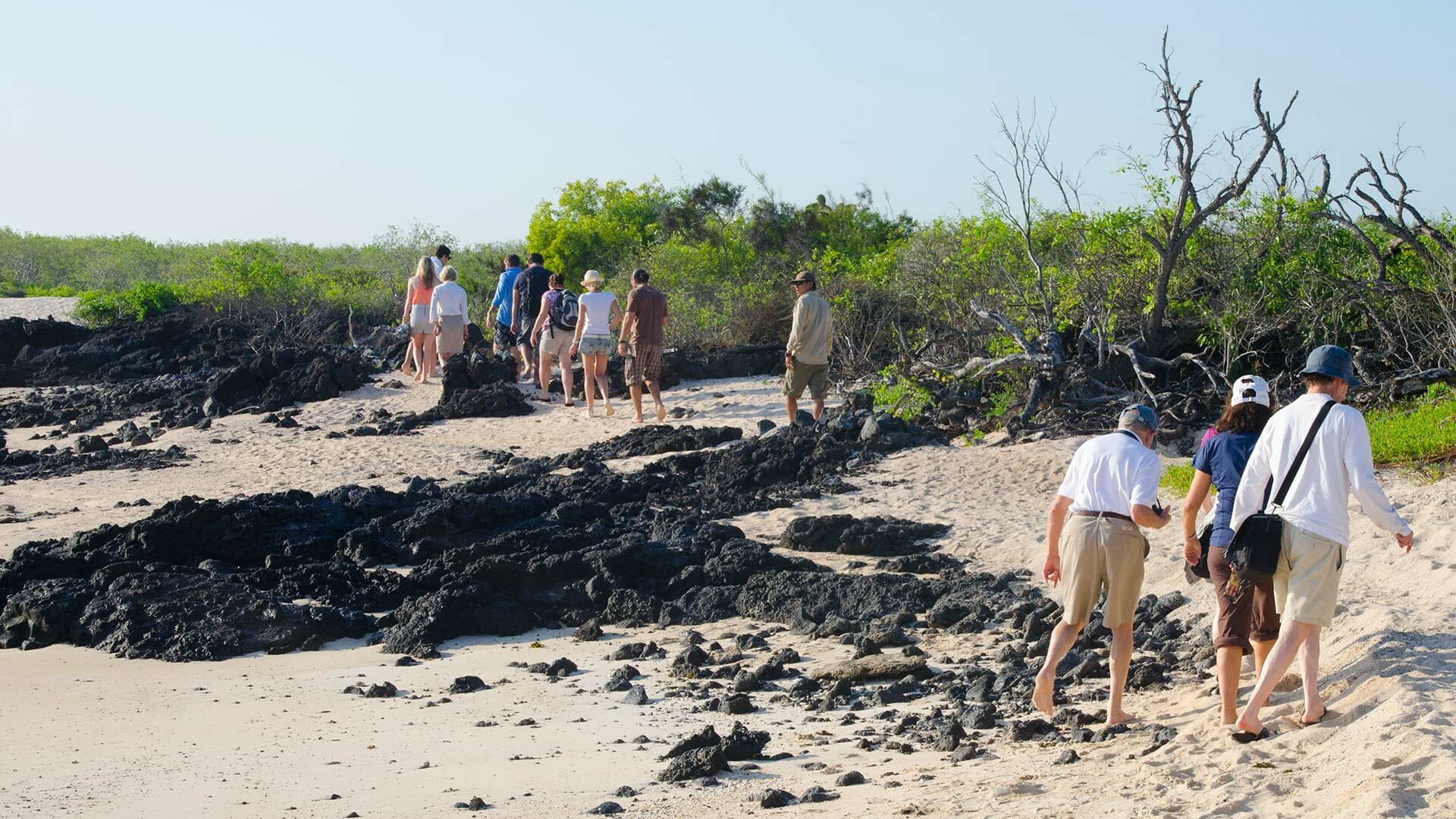 group of galapagos tourists walking on the beach