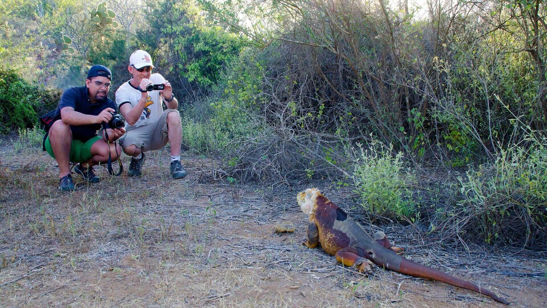 two tourists photograph a galapagos land iguana