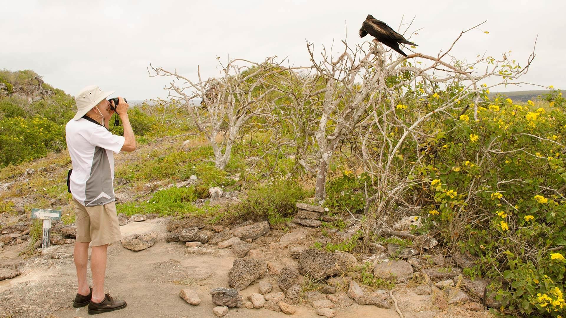 tourist photographs a frigate bird on a galapagos island hopping tour