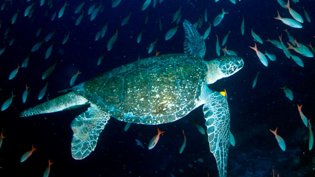galapagos diving tours with sea turtles