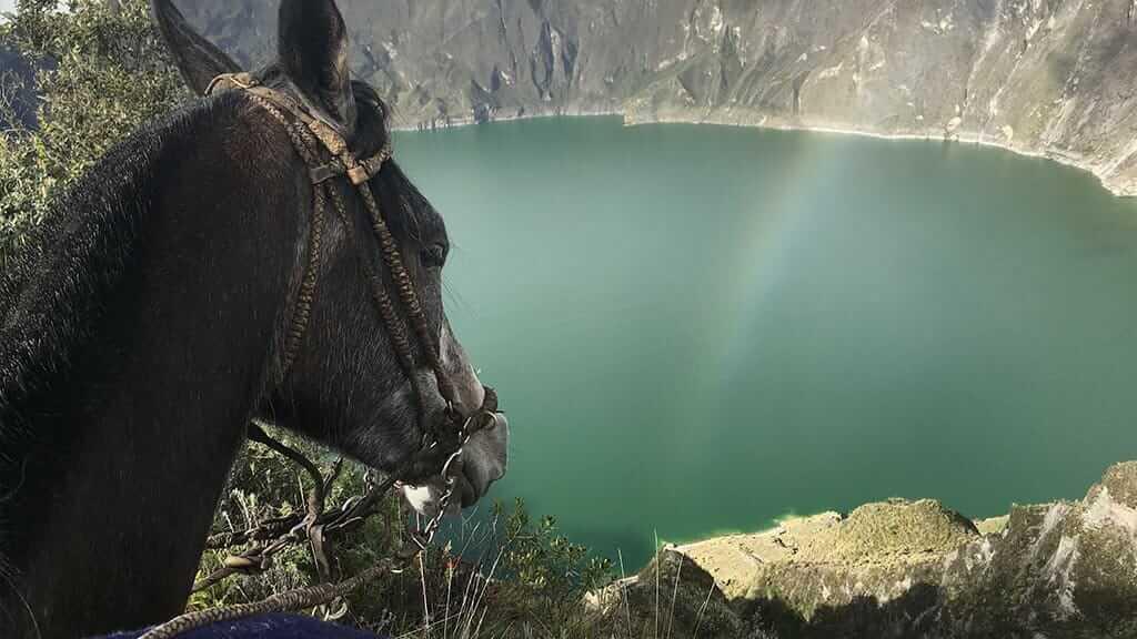 a mule looking over quilotoa crater lake ecuador