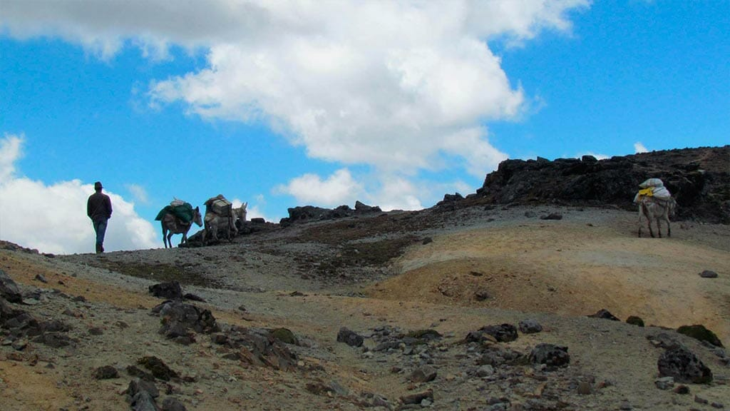 mules and guide on the ecuador inca trail