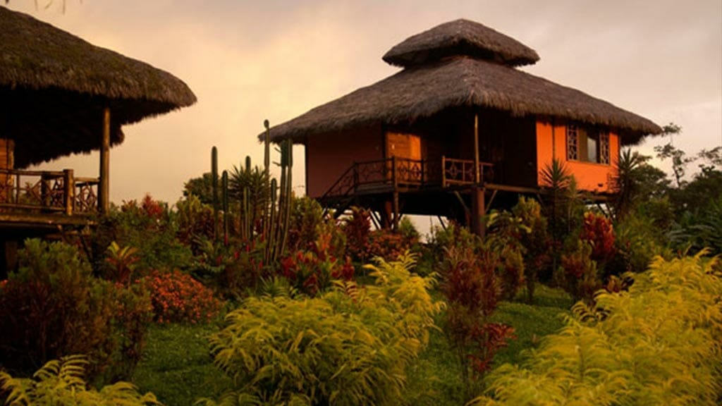 arasha resort ecuador - thatched roof bungalow on stilts