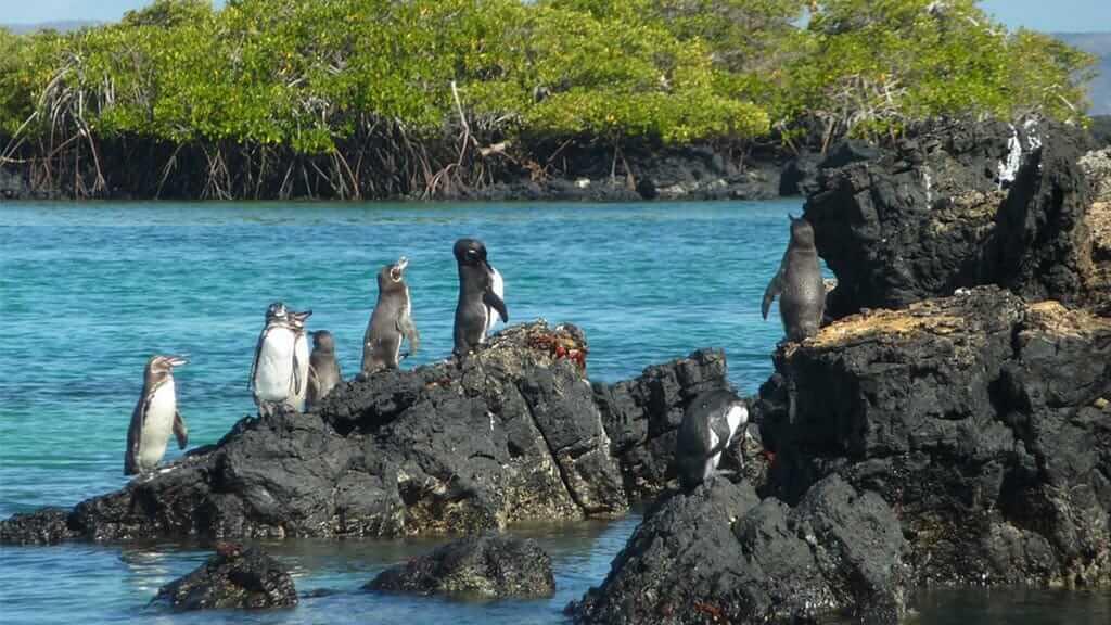 Fun Facts About Galapagos Penguins