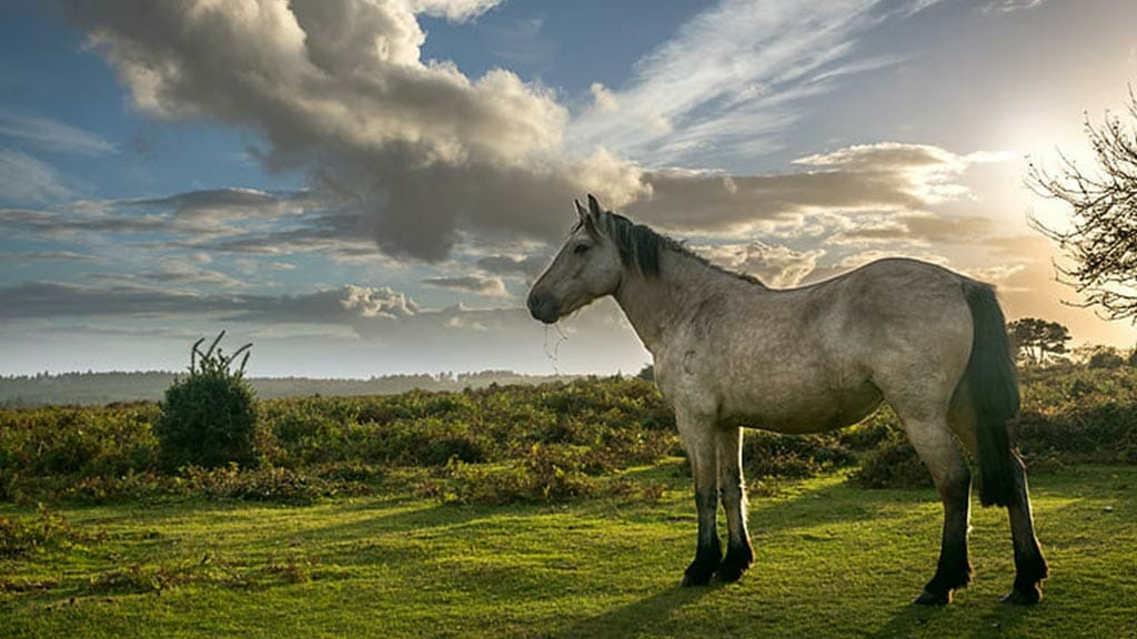 lovely white horse in ecuador cloud forest