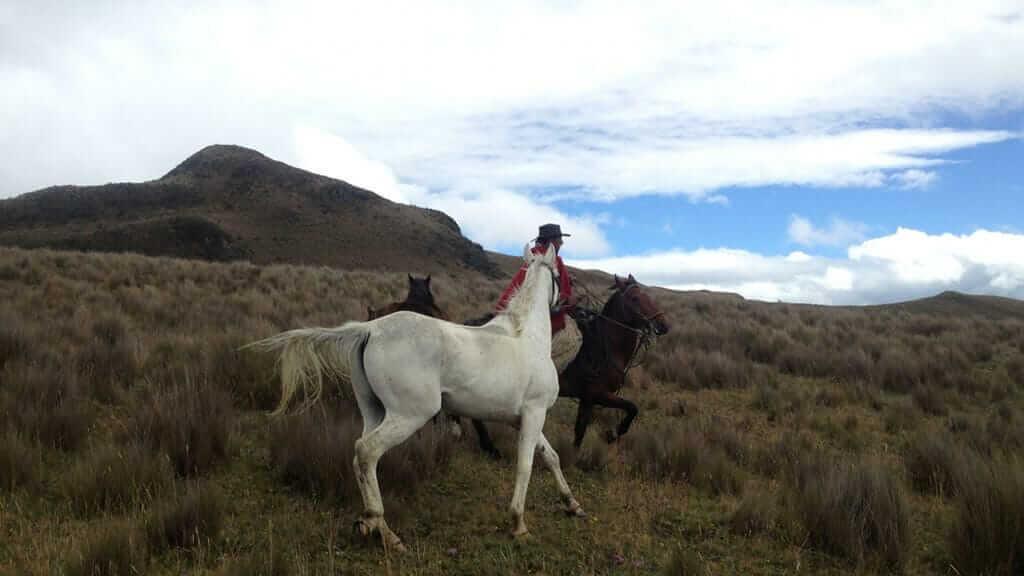 ecuador chagra horse riding on the paramo