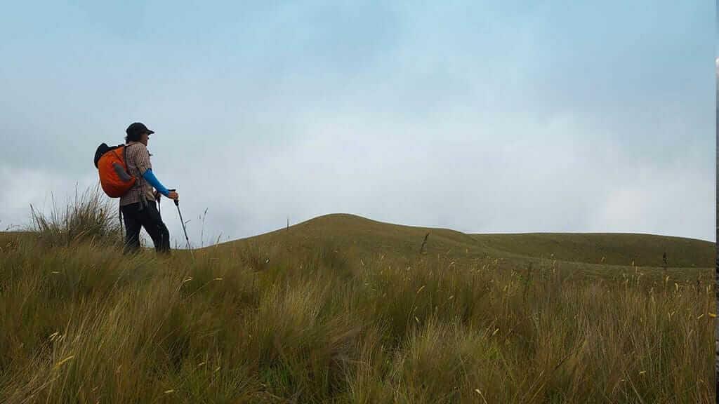 lone tourists on grasslands treking to illinizas ecuador