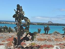 thumb north seymour island cactus and ocean at the galapagos islands