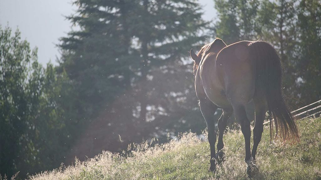 pululahua horse riding tour ecuador