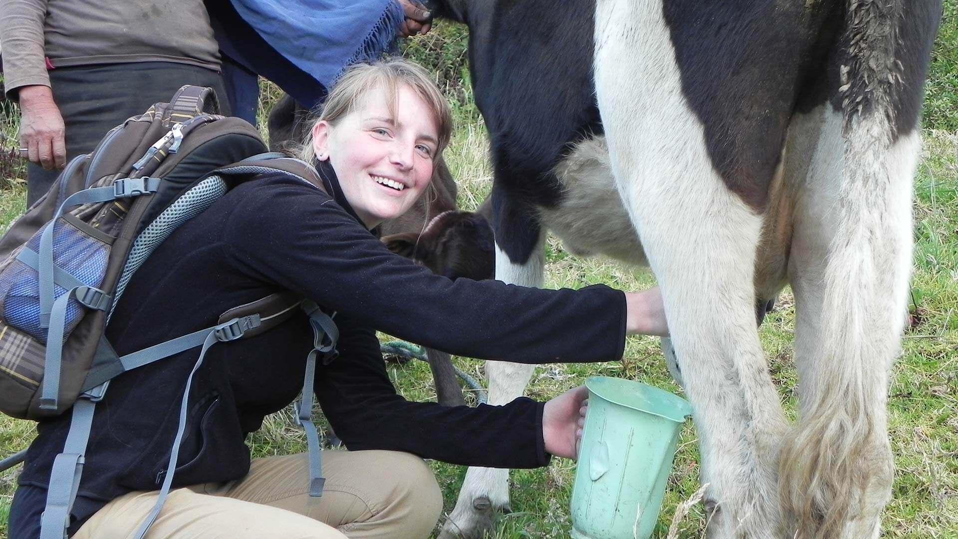tourist milking a cow at isinlivi ecuador