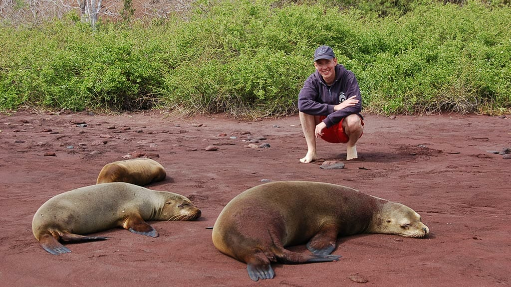 Tourist posing with galapagos sea lions on rabida island red beach