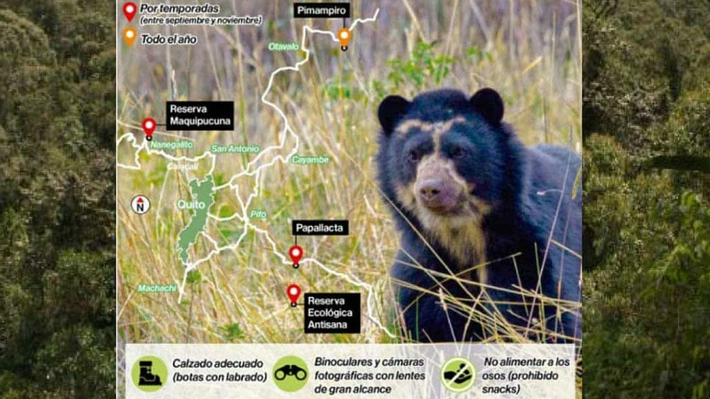 andean-bear-quito-map