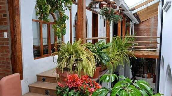 green plants at casa foch hotel, quito