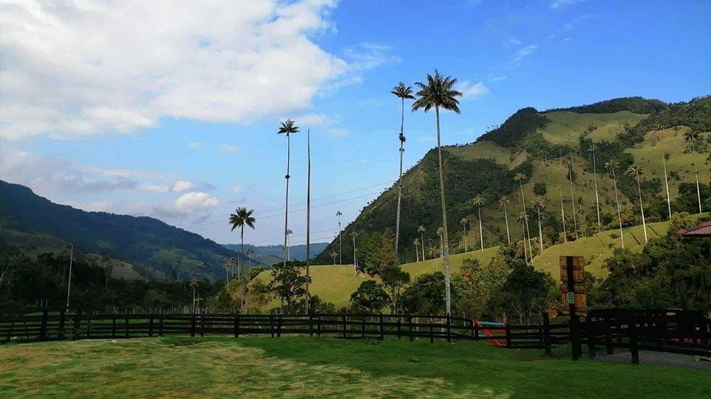 colombia coffee triangle - green mountains and high palm trees