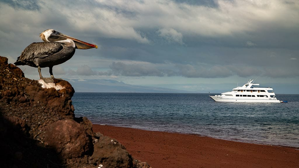 Galaxy I yacht Galapagos cruise - The Galaxy 1 anchored offshore with pelican perched on rock