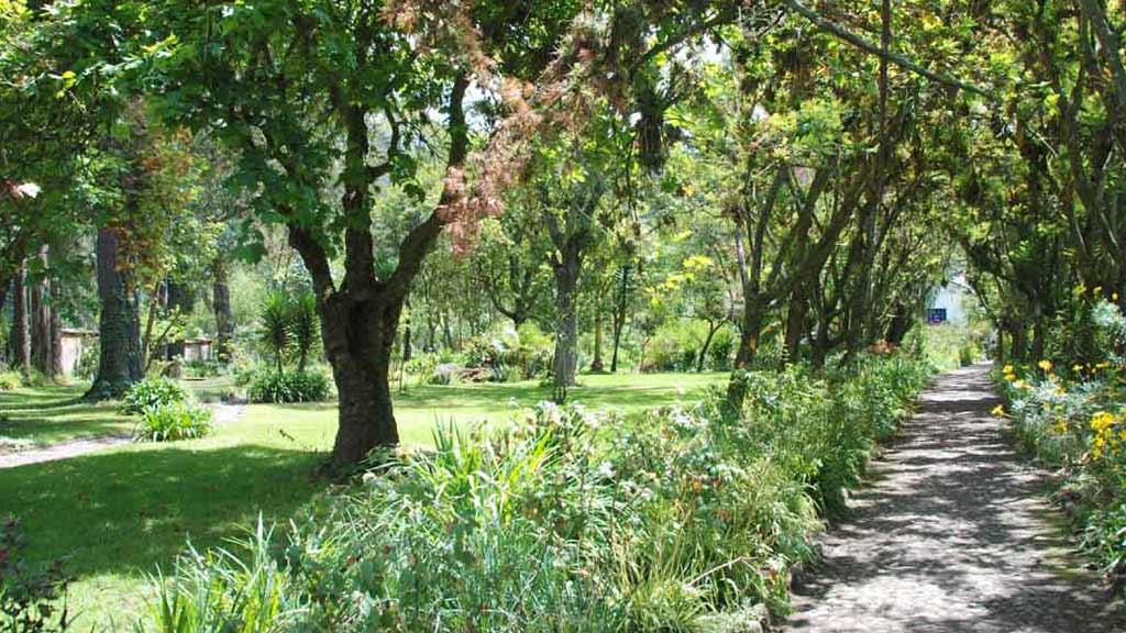 hacienda cusin ecuador - garden with trees, flowers and path