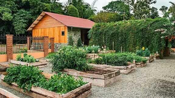 hacienda la danesa guayaquil organic vegetable garden