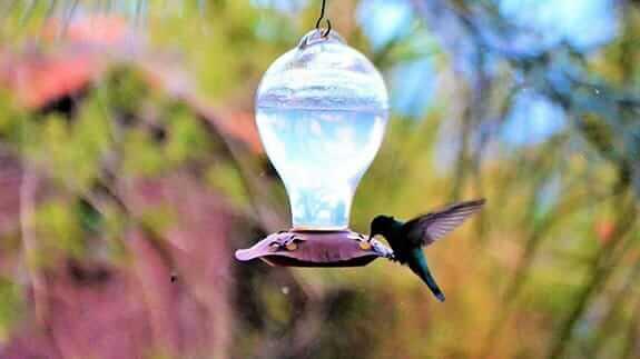 hummingbird drinking from a feeder at ilatoa lodge hotel quito