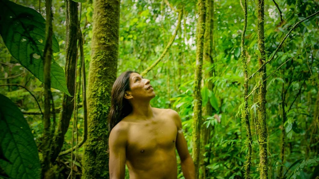 A topless Huoarani tribesman looks up into the forest canopy- Ecuador Amazon rainforest