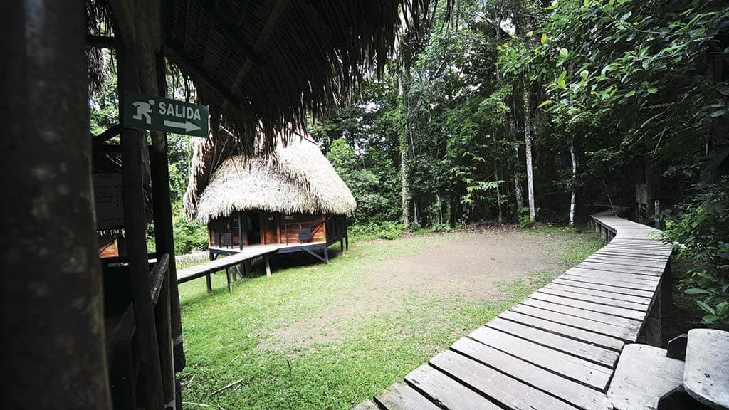 wooden walkways lead to Jamu lodge Cuyabeno rainforest ecuador