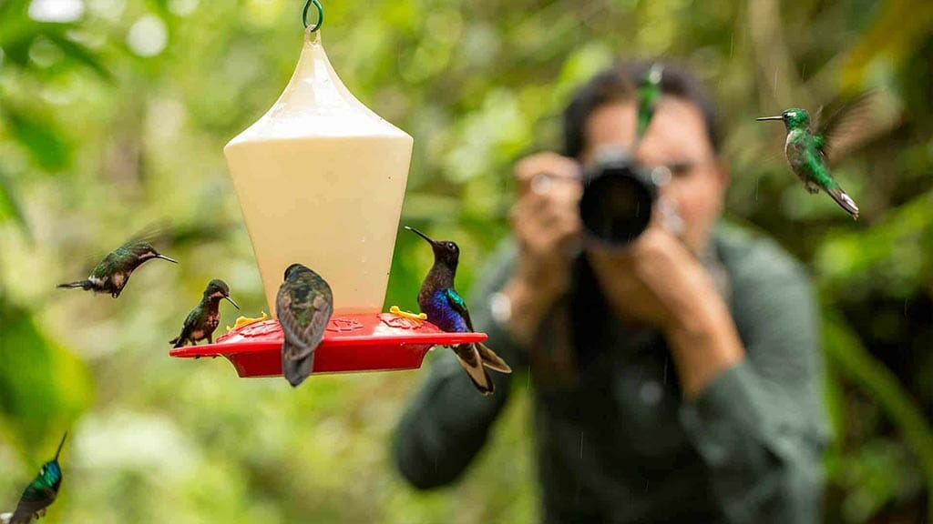 tourist taking photo of hummingbirds at mashpi cloudforest lodge ecuador