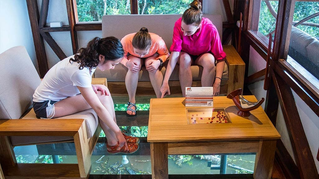 tourists watch caiman alligators through the glass floor of their cabin at napo wildlife center NWC lodge ecuador
