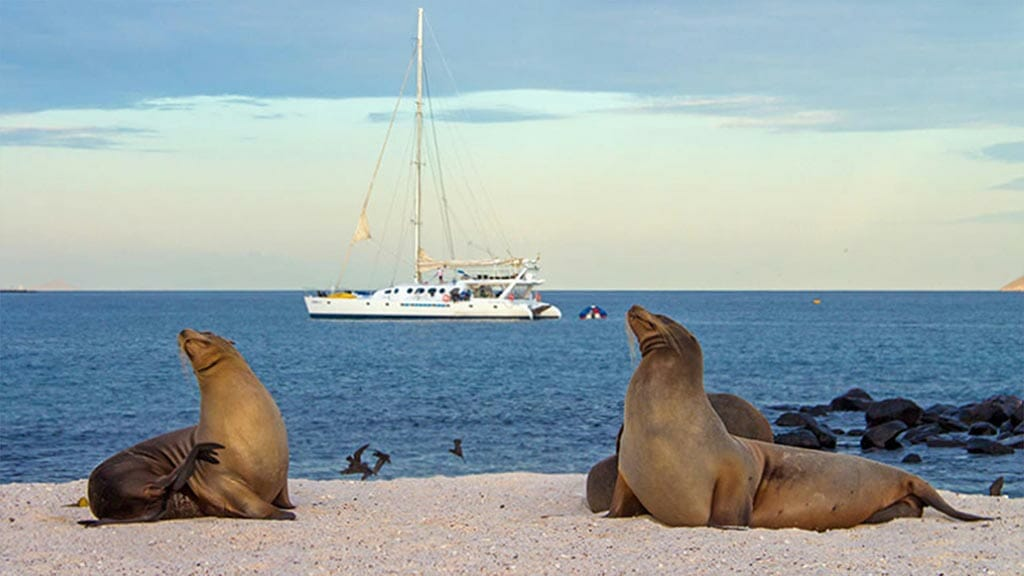 Galapagos sea lions preening on the beach with yacht in background