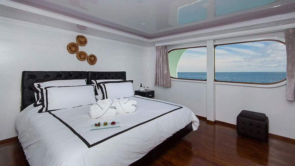 double guest cabin with large windows and wooden floor aboard the Petrel Galapagos yacht