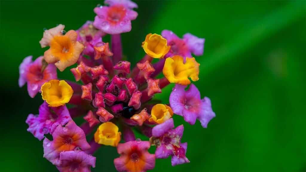 close up of pretty purple and yellow flowers on the salkantay trek peru