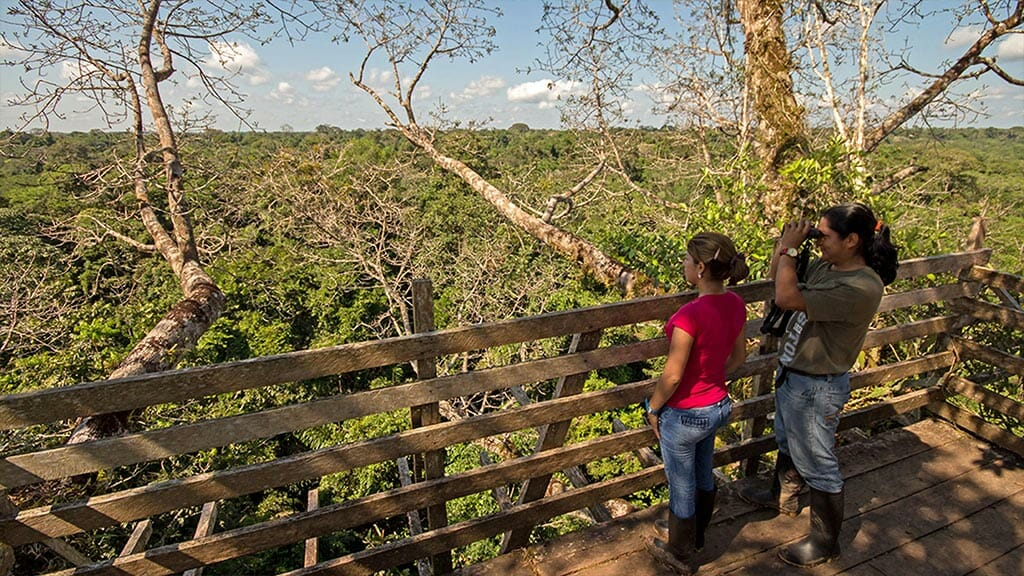 tourist with guide looking for wildlife from the Sani lodge jungle canopy tower