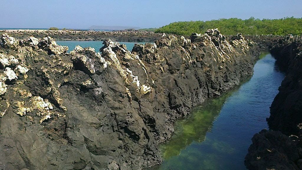 las tintoreras isabela island - shallow water channel where whitetip reef sharks hang out